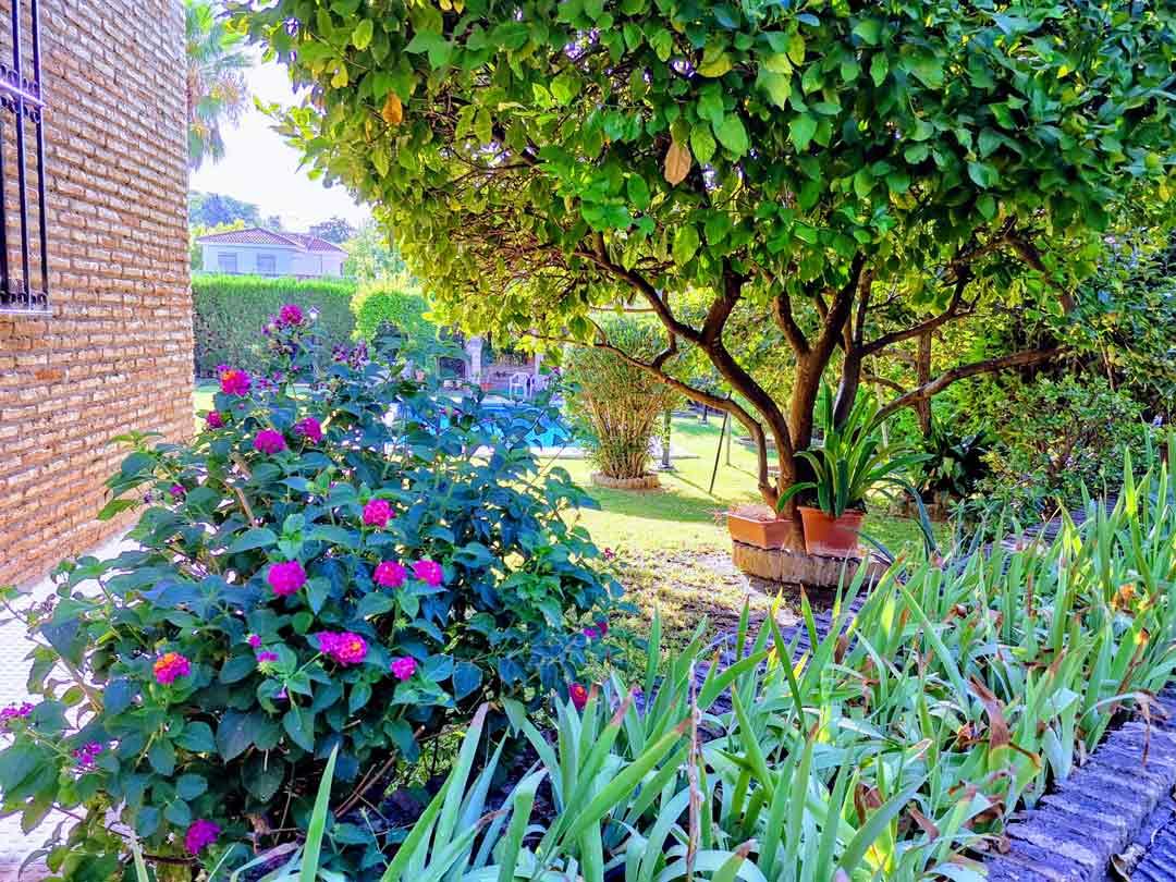 diseño exteriores y jardines plantarmadrid