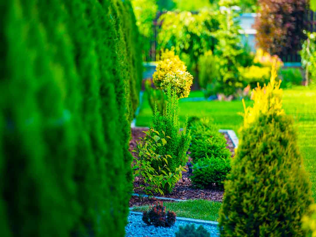 diseño jardines plantarmadrid