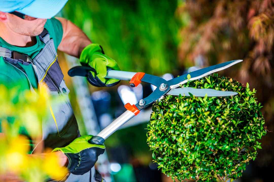 jardinero plantarmadrid