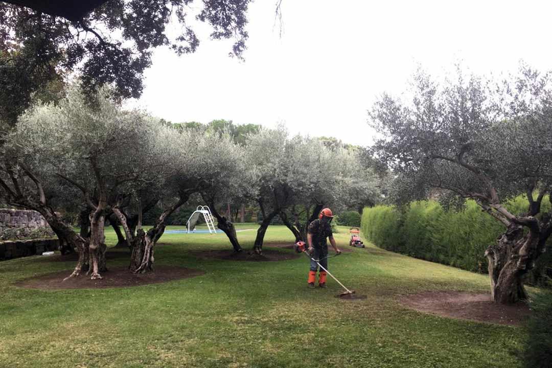 mantenimiento de jardines plantarmadrid
