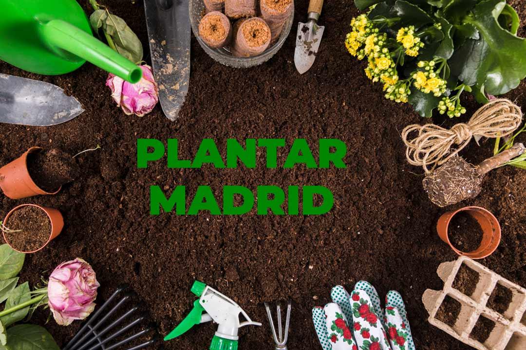 plantar madrid servicios de jardineria y paisajismo