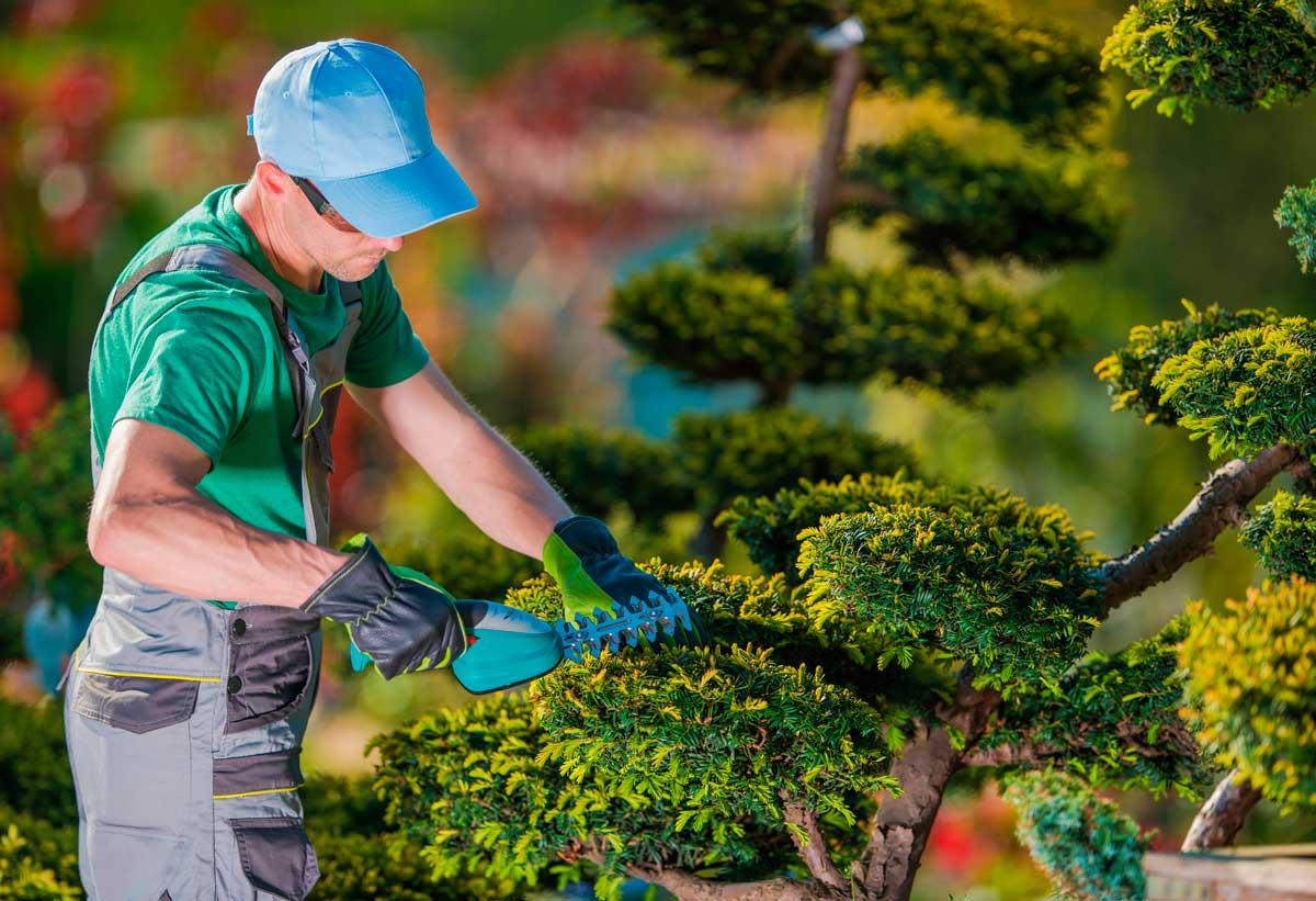 poda de arboles y limpieza de jardines