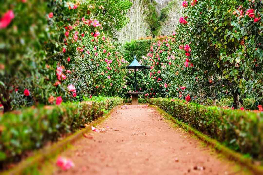 poda de jardines